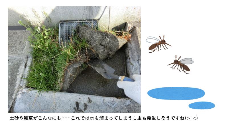 屋上排水溝に蚊